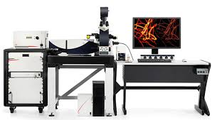 Leica SP8 STED super-resolution microscope imaging