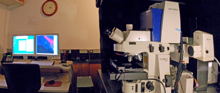 zeiss lsm 510 confocal microscope